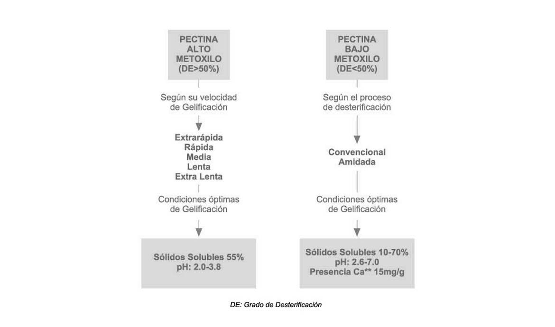 pectina_tiposGR